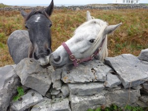 small_AD_Galway_16012011_511