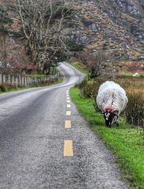 Sicherheit auf Irlands Straßen